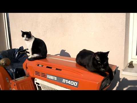 Kubota 1400 i  6001 japońskie mini traktory z kotami. www.traktorki.waw.pl