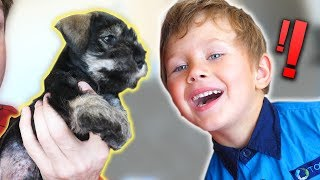 SURPRISING KIDS WITH A NEW PUPPY!