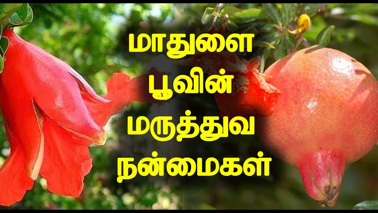 மாதுளை பூவின் மருத்துவ நன்மைகள்   Medicinal Benefits of Pomegranate Flower