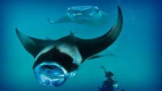 Maldives: Diving Paradise (full Documentary)