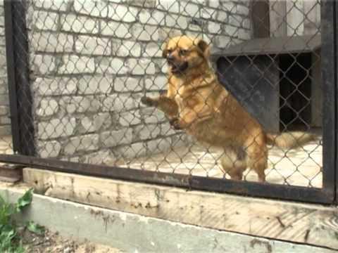 Смотреть видео День открытых дверей в приюте  «Рембо» для собак и кошек