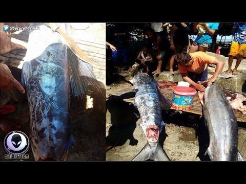BIZARRO Marcas estranhos em peixes capturados na Filipinas!