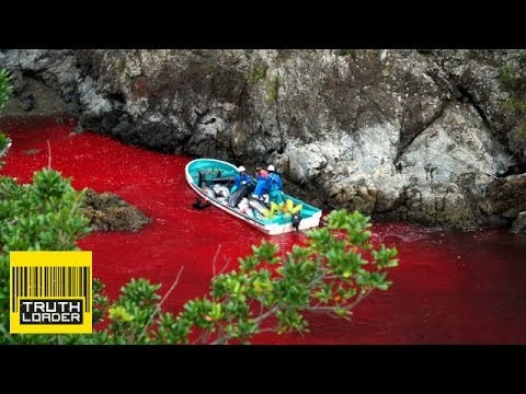 Dolphin slaughter, Obama on weed and Mars Rover mystery - Truthloader