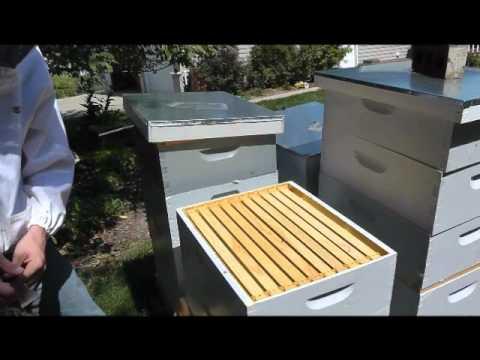 How to Harvest Harvest Honey - Beekeeping Tutorials