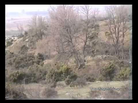 κυνήγι λαγού με αρτουά_2012