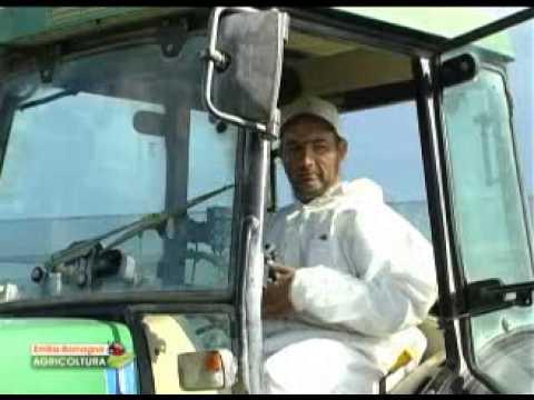 Uso della calce in agricoltura
