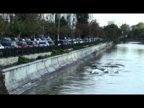 Delfini maidanezi în Dâmboviţa! Cu moldoveni ))