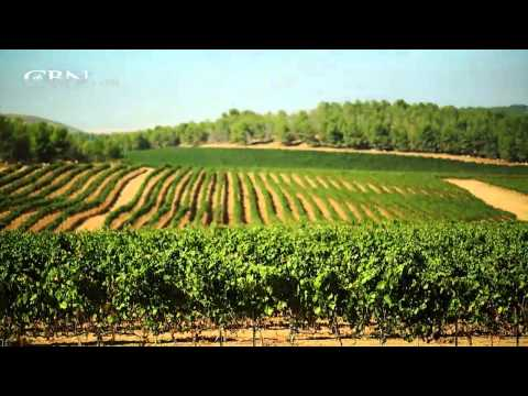 Made in Israel: Agriculture
