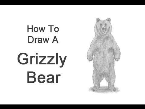 How to draw a cartoon grizzly bear - photo#28