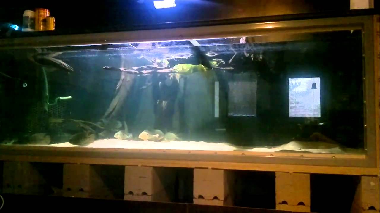 Building a Plywood Aquarium