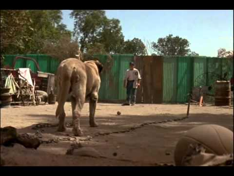 The Sandlot Dog The sandlot - benny versus the