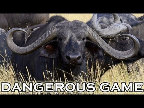 Hunting dangerous game in Mozambique