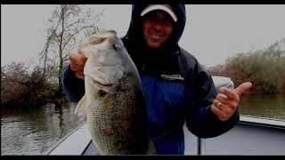 Cranking trees for largemouth bass