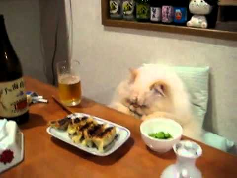 fat cat sitting down and eating sushi with hands youtube. Black Bedroom Furniture Sets. Home Design Ideas