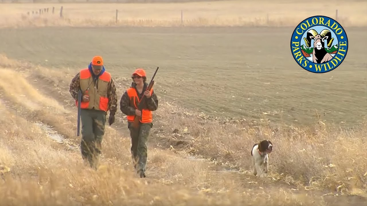 Pheasant Hunting Colorado - YouTube