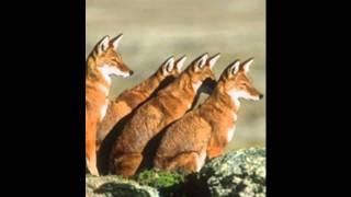 "Tefera Kassa - Chelema Tegefo ""ጨለማ ተገፎ"" (Amharic)"