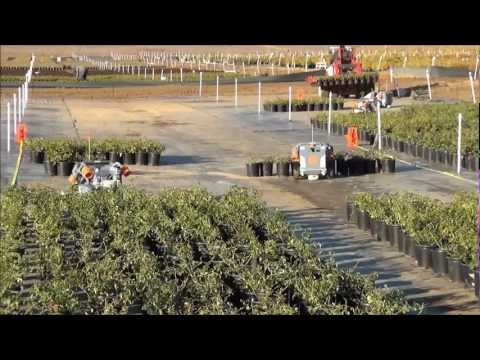 Harvest Automation's robots space plants @Altman Plants in CA