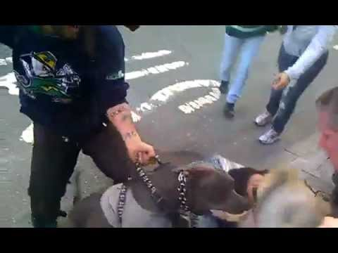 Pit Bull attacking little dog on streets of NYC