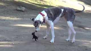 Pequeño cachorrito conociendo un perro grande
