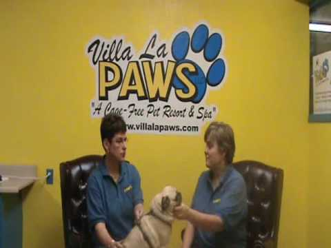 Dog Dental Care: Pet Grooming Tips from Villa La PAWS