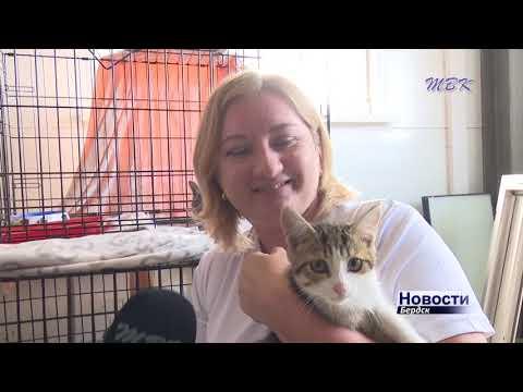 Международный день кошек: как живут мурлыки в бердском приюте для бездомных животных?