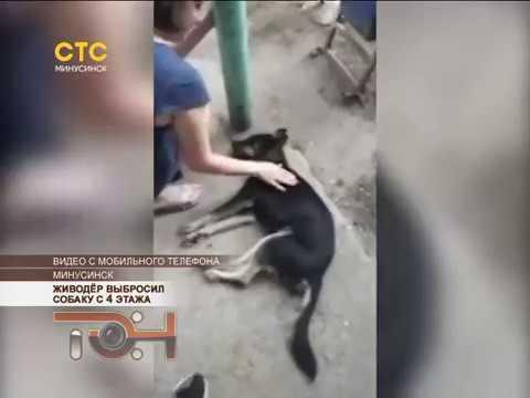 Живодёр выбросил собаку с 4 этажа