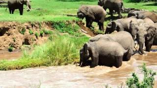 Elephant calf river rescue © Sandy Gelderman