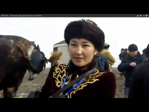 BBC News   Hunting with eagles gains popularity in Kazakhstan