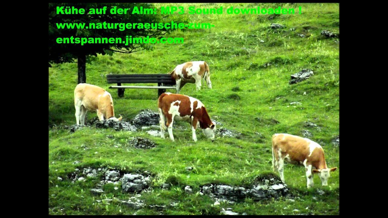 Kuhglocken naturklänge zum entspannen downloaden kühe