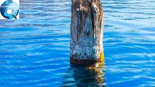 Khúc gỗ bí ẩn nổi trên mặt nước hàng trăm năm khiến giới khoa học bó tay