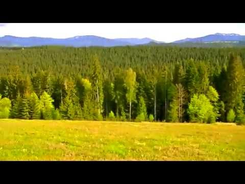 1moment nature mountain pine overview panorama forest trees freshair