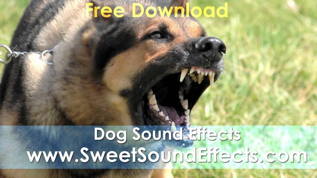 Dog Barking Sound Effects Free Download