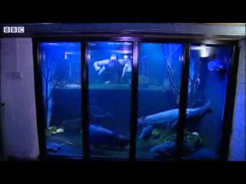 Bbc news nottingham fish tank man dreams of big aquarium for Dream of fish tank
