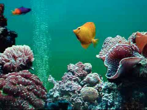 Aquarium tropical fish tank youtube for Youtube fish tank