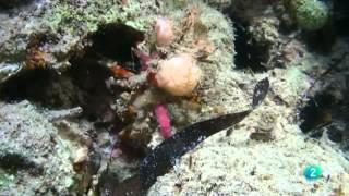 El Maravilloso Mundo De Los Crustáceos