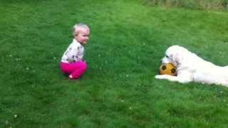 [OMG dog gives ball to baby]