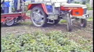 Digging Potatoes With A Zetor 5911 And Samro Harvester