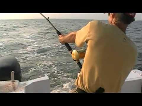 New massive tiger shark caught on tape hilton head for Outcast sport fishing