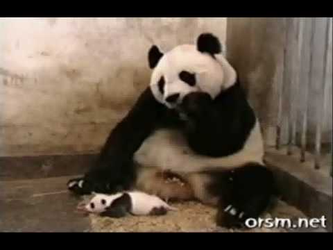 cute amp funny collection of animal videos   youtube