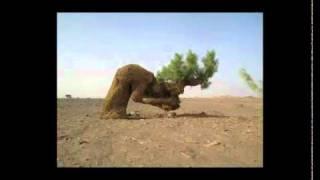 شجرة تسجد لله سبحان الله مقطع رائع