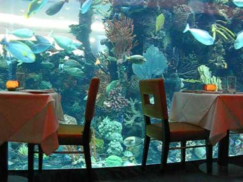Aquarium Mandalay Bay Hotel Las Vegas Glass Floor