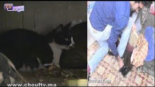 حصري.. قطط ماريلينز داخل غرفتها بعد وفاتها |