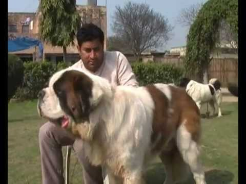 Dogs Day Care In Pune