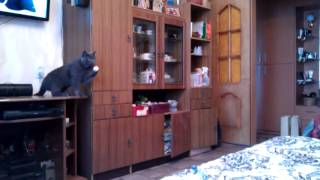 Cat Plays Ping Pong Like A Master