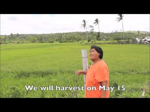 Typhoon Haiyan, six months on: Rebecca Rita explains how we helped