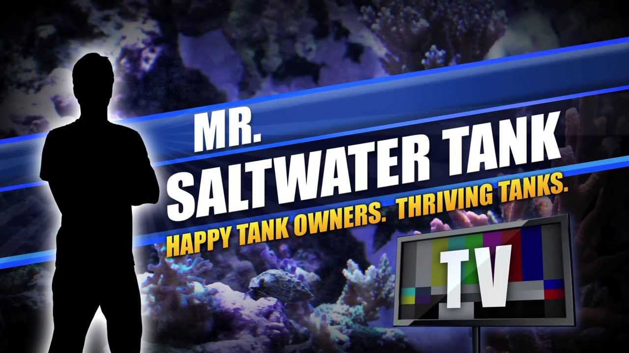 Mr saltwater tank 39 s ultimate tank overhaul of a 75 for Google fish tank mrdoob