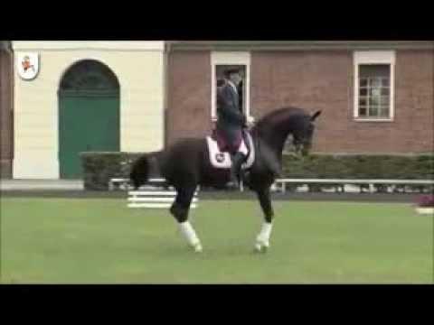 DANCIER: Hannover dressage stallion by De Niro, www.equine-evolution.com