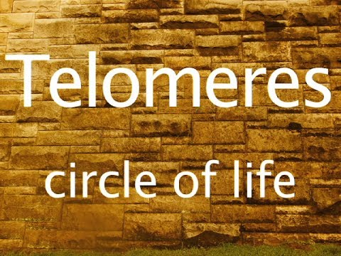Telomeres  and The Circle of Life