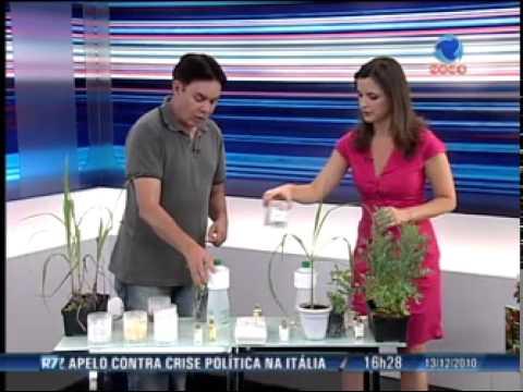 Saiba como combater insetos e pragas com ervas e produtos naturais