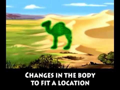Camel Train to Yamba Acordes - Chordify